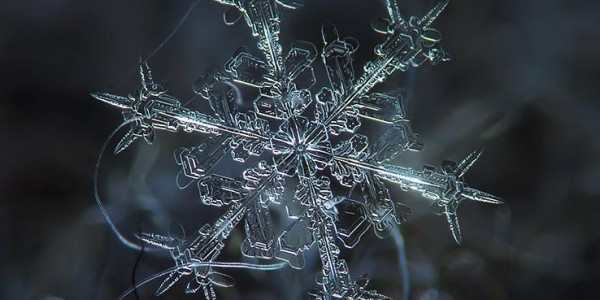 Stock Plugins & Snowflakes- The Secret to Making Something Out Of Nothing